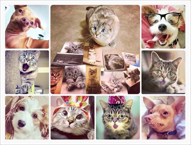 pets of instagram