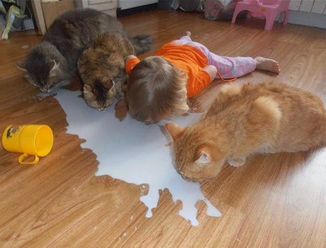 spilt milk positive